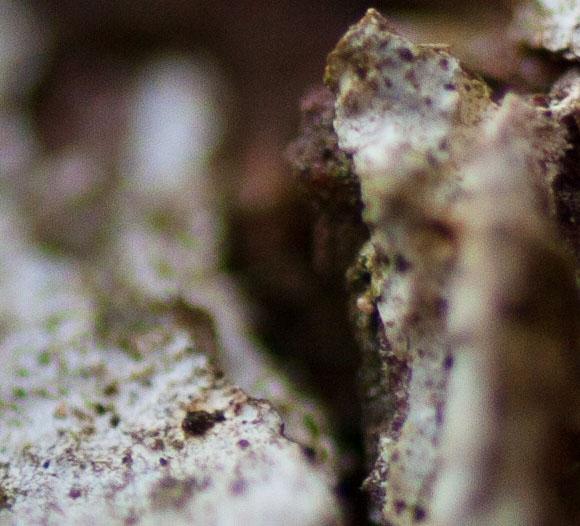 Tamron SP AF 60mm f/2.0 Di II LD (IF) Macro Fot. Maciej Chyra www.maciejchyra.com
