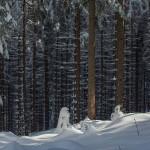 Dual-ISO fot. Maciej Chyra