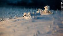 TOY GIMP fot. Maciej Chyra